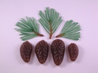 Branches, Pine Cones,  Small Leaves