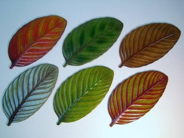 Rain Forest Leaf Variations